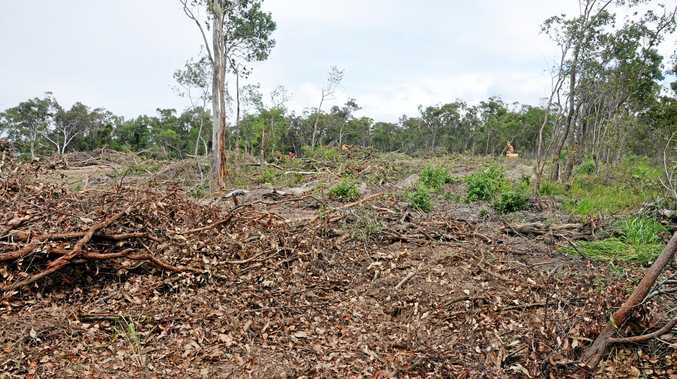 Hectares of native trees, wildlife destroyed for development