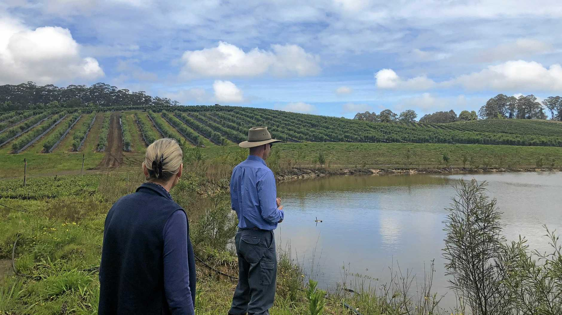 The Natural Resources Access Regulator (NRAR) will visit Coffs Harbour fruit and vegetable farms to check they're complying with water management laws.