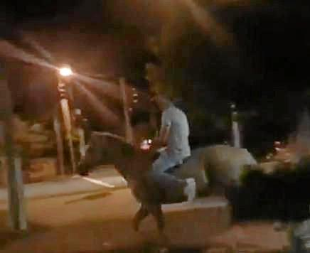A still from footage of a horse allegedly being ridden through the veranda of the Jockey Club Hotel after Gympie's Bull n Bronc in February.