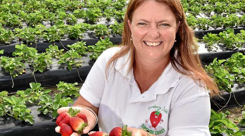 DELICIOUS: Lisa Eastdale was excited to share some of the fresh, ripe strawberries picked straight from the patch at Strawberry Fields.