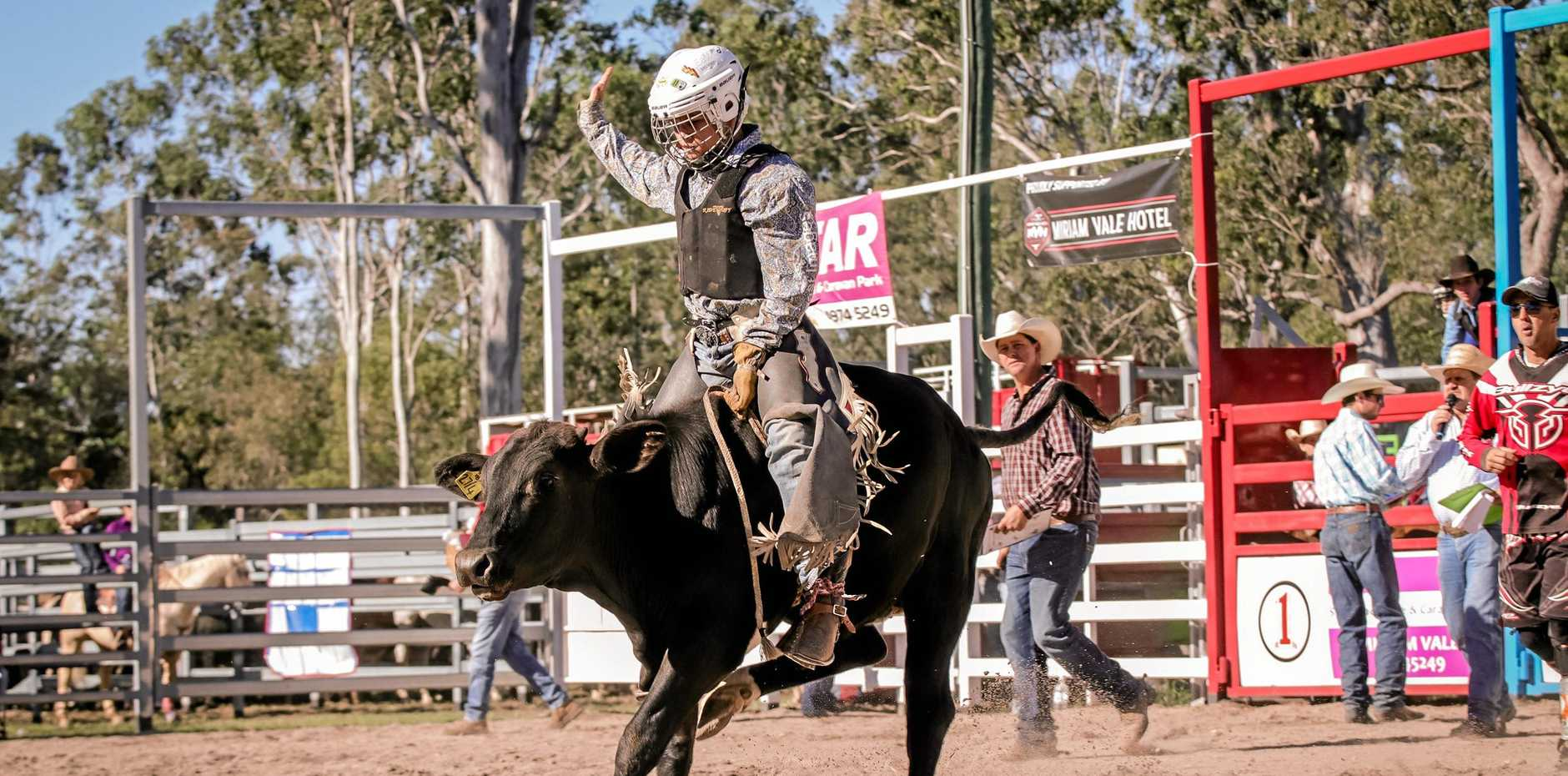 LITTLE WINNER: Young Laidley poddy calf rider Lucas Taylor hangs on long enough to secure two wins in one day.