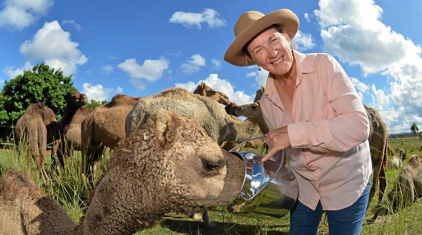 NEW RANGE: QCamels owner Lauren Brisbane is expanding their range of camel milk products.