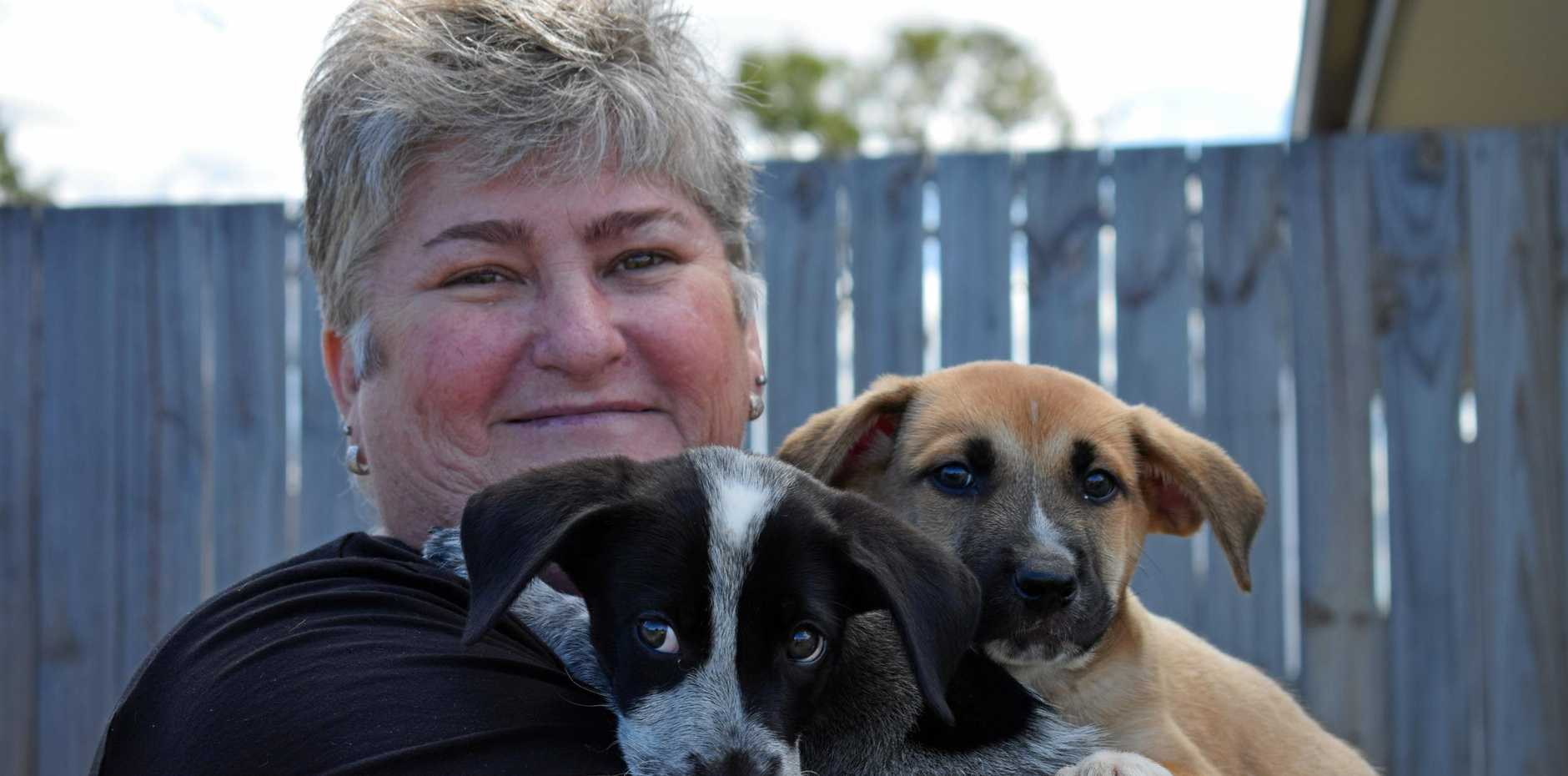 IRRESISTIBLE: Gladstone Animal Rescue's Karen Uridge with foster dogs Bandit and Bear. The group is in urgent need of dog foster carers.