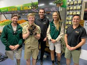 Robert Irwin saves fruit store from prickly predicament