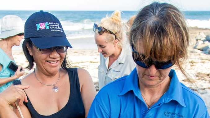 Volunteers fight to right wrongs done to turtles