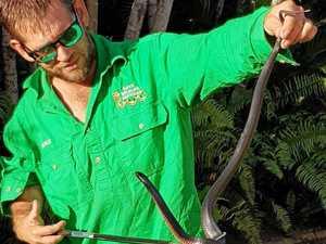 Pantry shock: Homeowner finds killer snake in cupboard