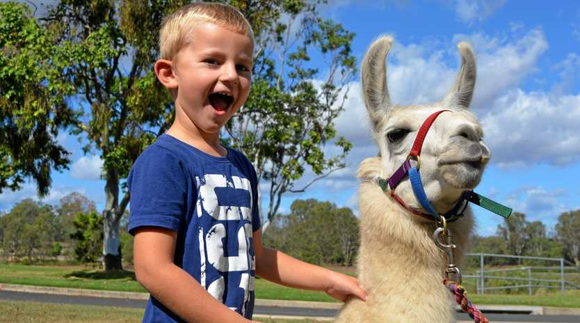 Will Whiting hang out with a llama at the Gatton library after National Simultaneous Storytime.