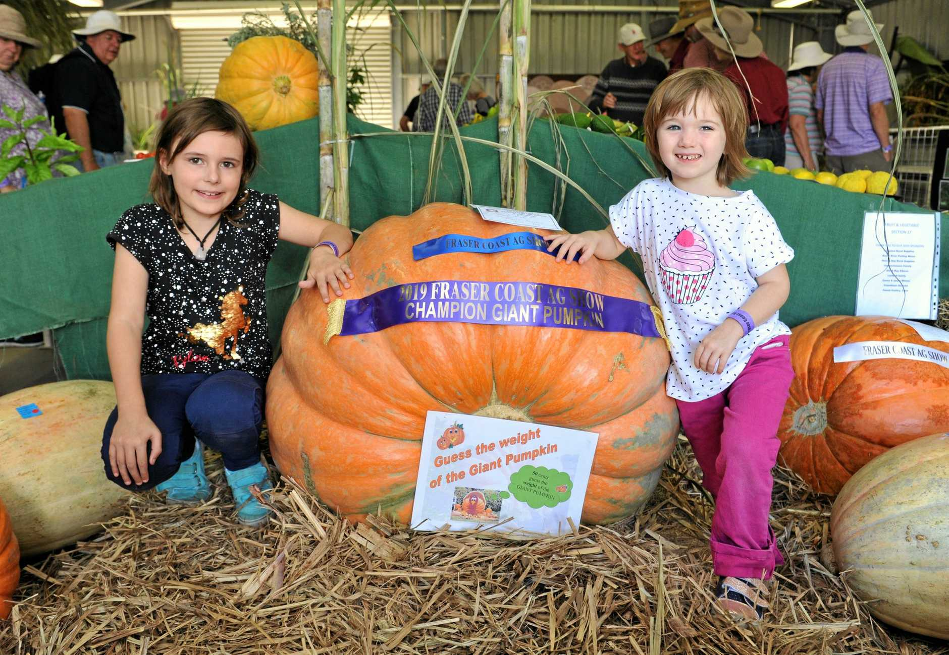 CHAMPIONS ON SHOW: Lily, 7, and Mae, 4, Allen from Burrum Heads get up close to George May's champion pumpkin.