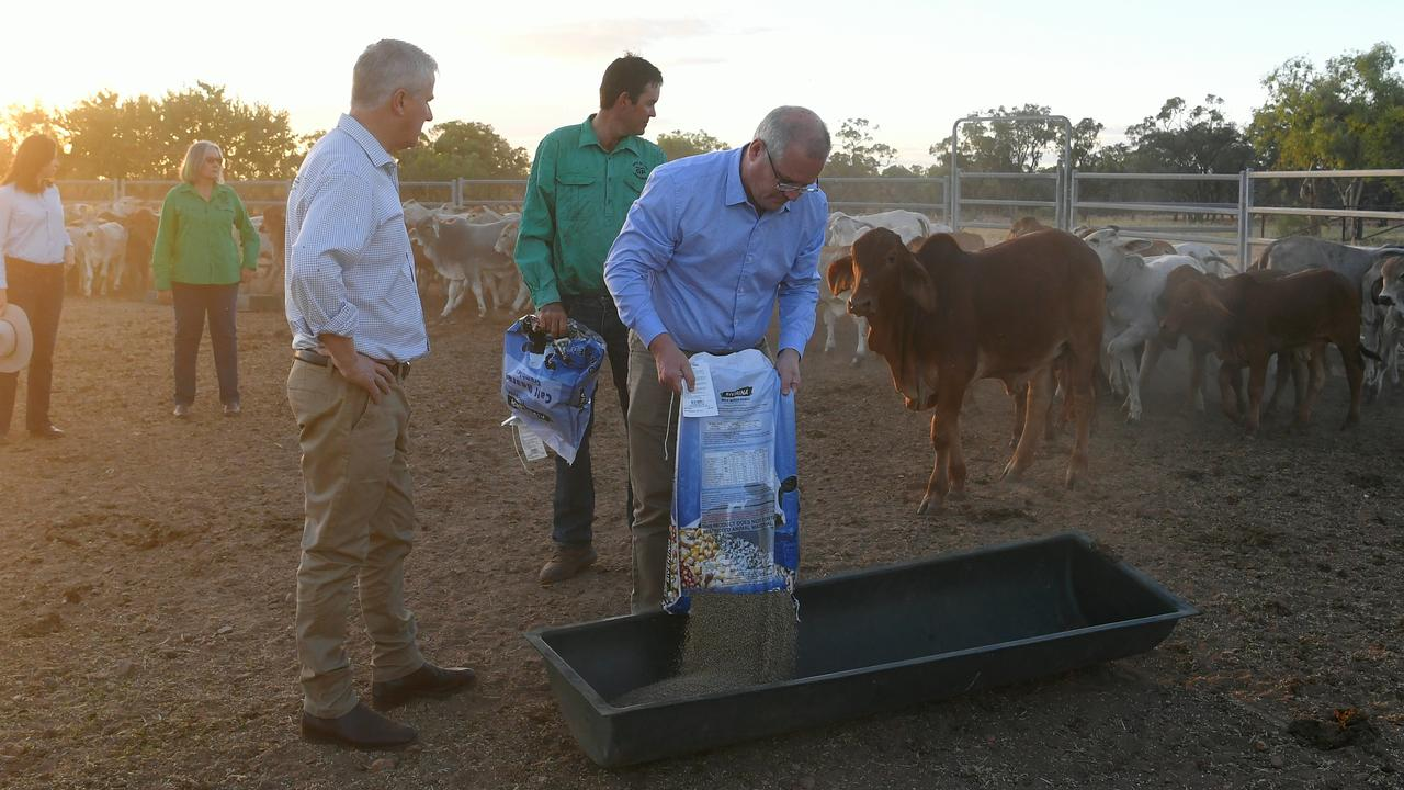 Prime Minister Scott Morrison is seen feeding Brahman calves during a visit to Gipsy Plains near Cloncurry. Picture: AAP Image/Lukas Coch