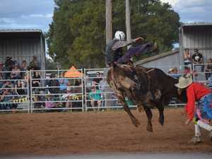 Competitors give their all at the Chinchilla Show
