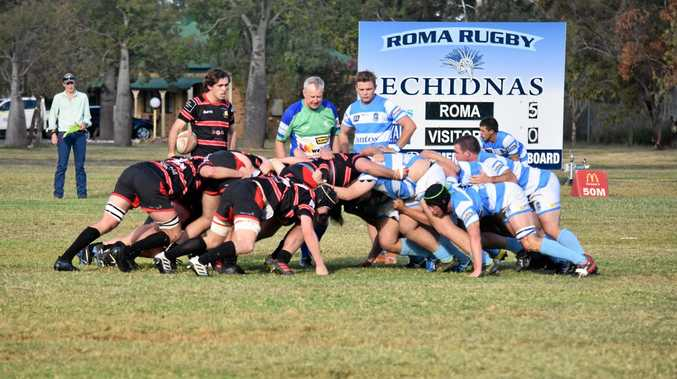 Echidnas too strong for Black Pigs
