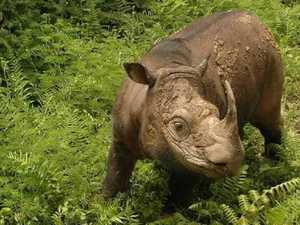 Last male rhino dies as species under threat