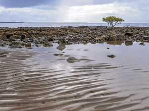 Marine conservation tops EnviroForum agenda