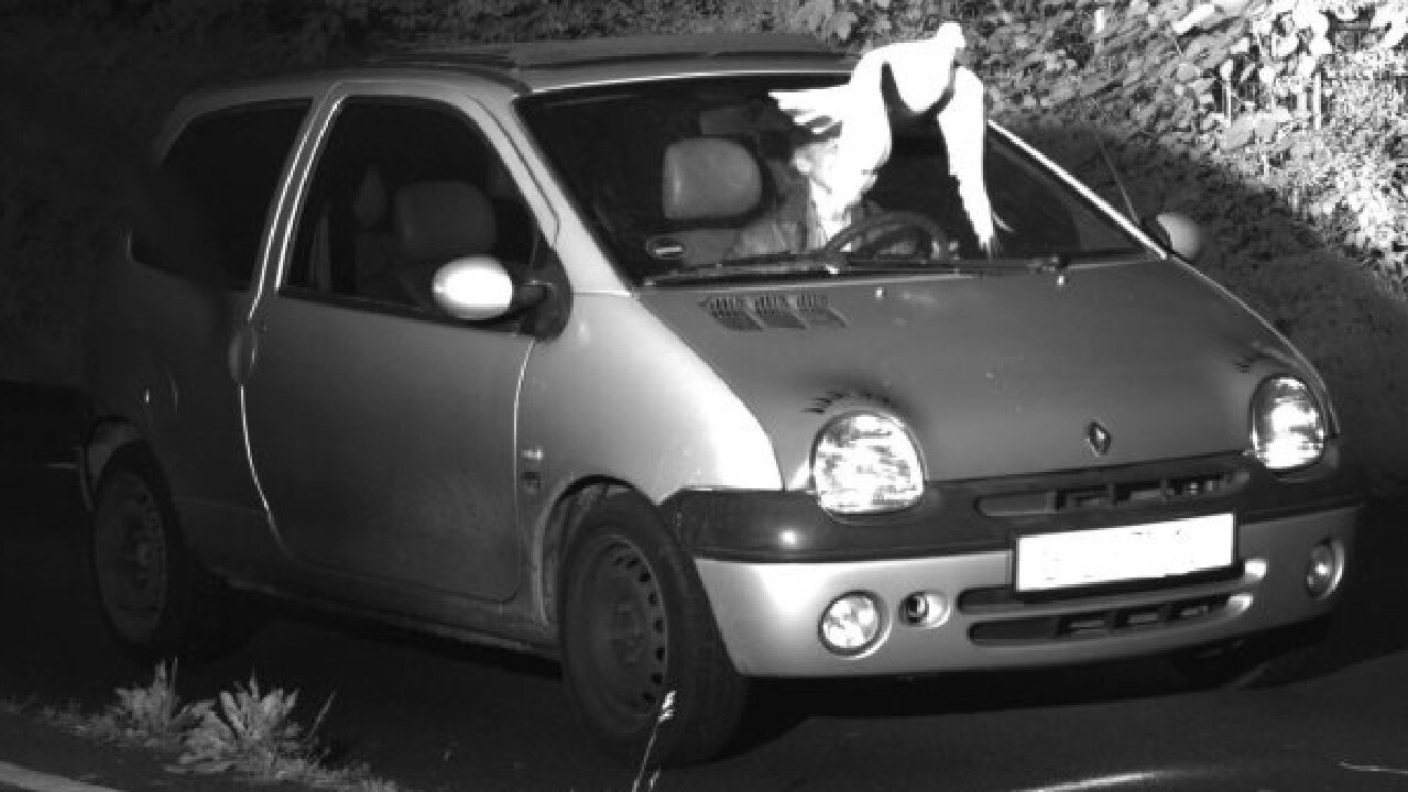 A well placed pigeon saved this driver from a speeding fine.