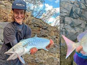 Gympie region reefs that are firing due to ideal conditions
