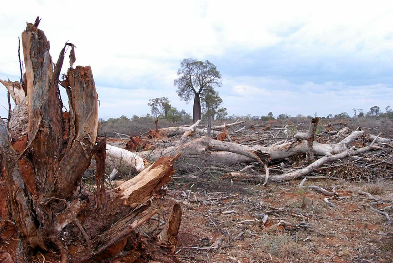 Gympie letter writer Charlee Chubb says we are 'suffocating ourselves' with our land clearing.