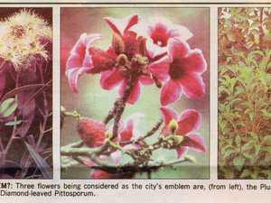 City's floral emblems bloom