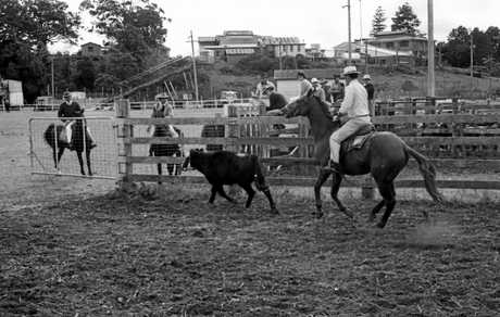 Calf-roping, another popular event at the Maleny Show and Rodeo, 1981.
