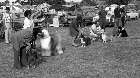 TAILS, YOU WIN: The Pedigree Dog Show, a popular event at the Maleny Show in 1981.