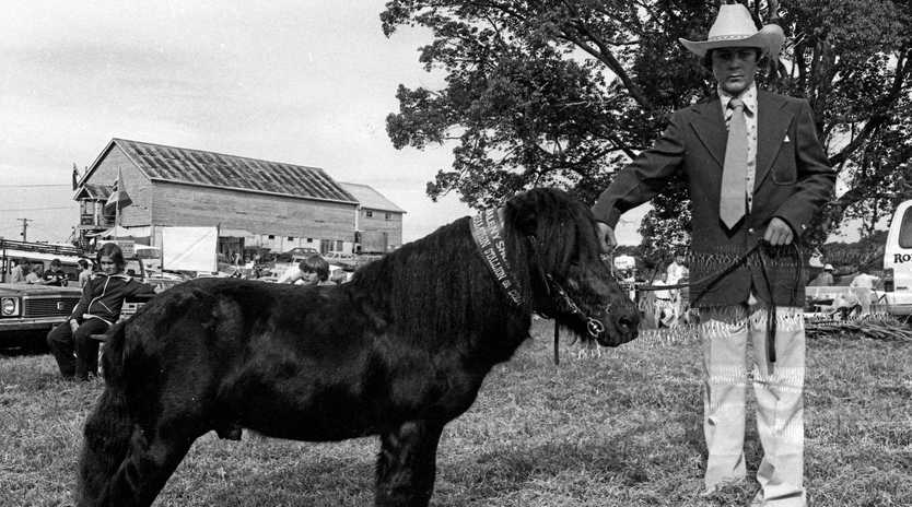The winner of the Champion Stallion or Colt Division stands tall with its handler at the Maleny Show held in 1981.