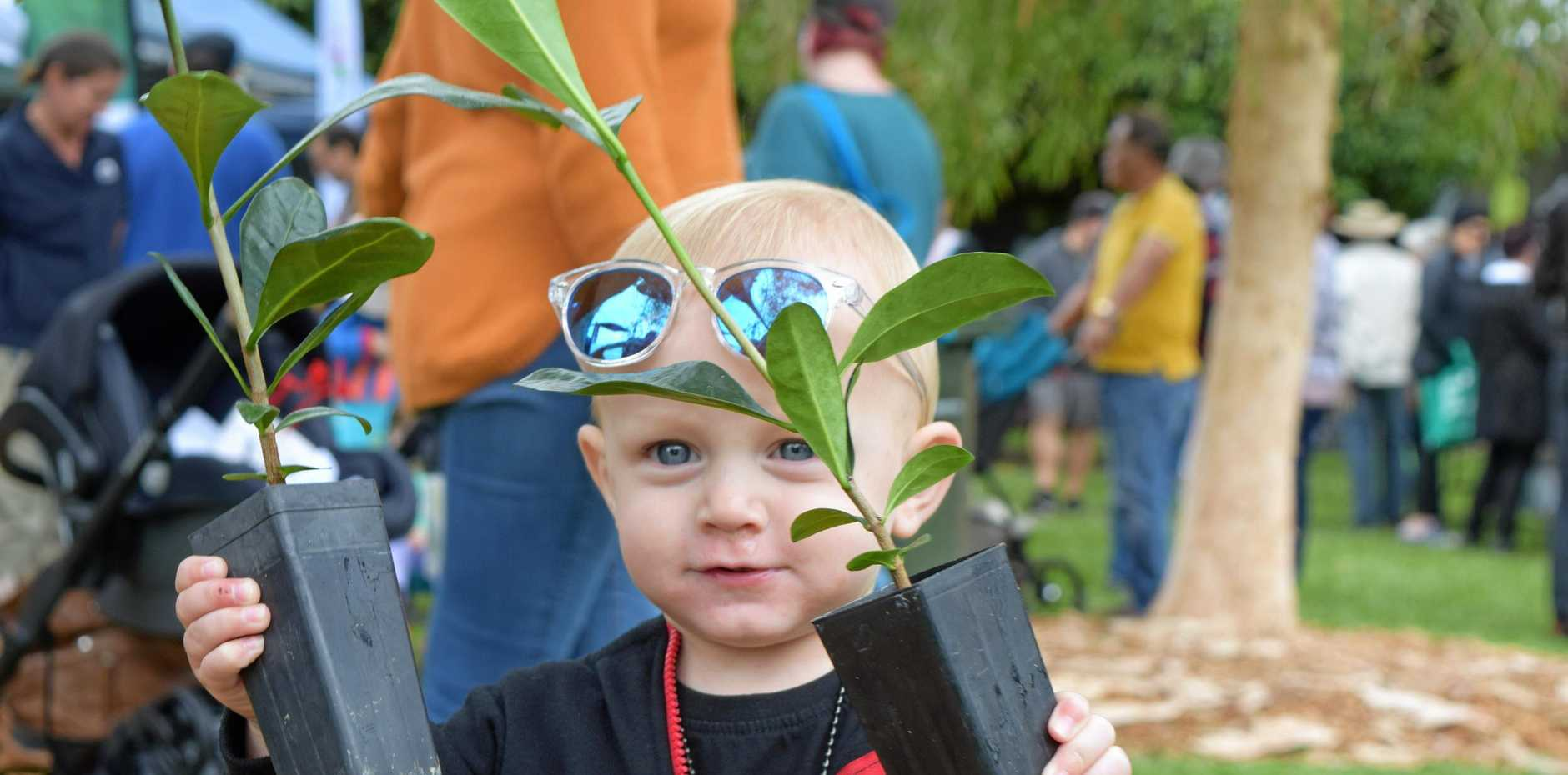 Zander Hobley (16 months old) happily carried around the free native plants his parents picked up at the Botanic Gardens Open Day.