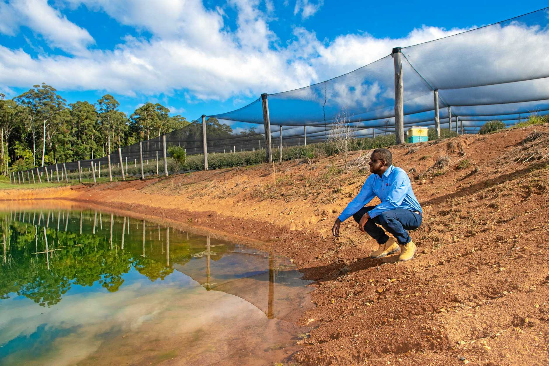 WATER WATCHERS: Guy Ohandja, compliance and audit manager with the Natural Resources Access Regulator, inspecting a dam on a Coffs berry farm last week.