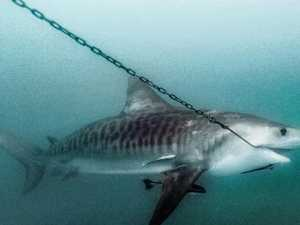 'Gagged': Activists' fury over new shark laws