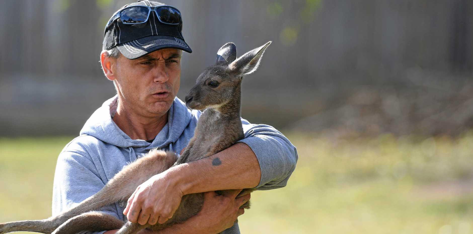 Wildlife carer Danny Williams and his kangaroo Esperance, who he rescued in Western Australia.