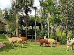 Historical house for sale with bonus alpacas