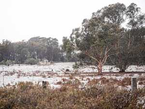 Excitement as snow falls on Southern Downs