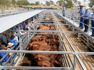 Biggenden's June weaner sale filling up fast