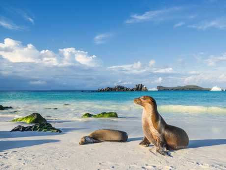 The Galapagos Islands are becoming a victim of their own popularity.