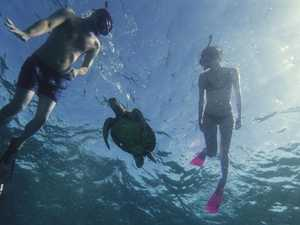 Snorkeller drowns on Great Barrier Reef