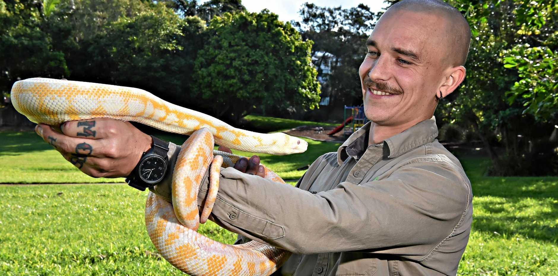 WELCOME GUEST: Coolum snake catcher Rhys Chapman with an albino Darwin carpet python.
