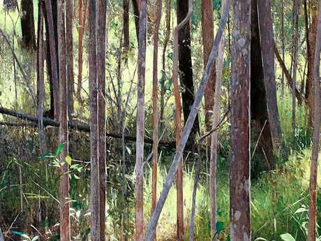 At Caloundra Regional Art Gallery is Forest Ground, Early Light by A.J. Taylor.