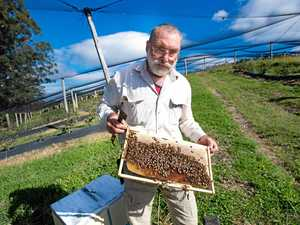 Beekeeper keen to tell his blueberry story