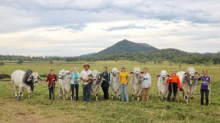 CATTLE CLUB: Lilli Humberdross, Peta McMahon-Neale, cattle owner Lawson Camm, SCCC teacher Jessica Hehir, Casey Lade, Keelan O'Brien, Jesse Askew and Millie Cran.