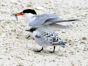 Which island is home to a range of nesting species?