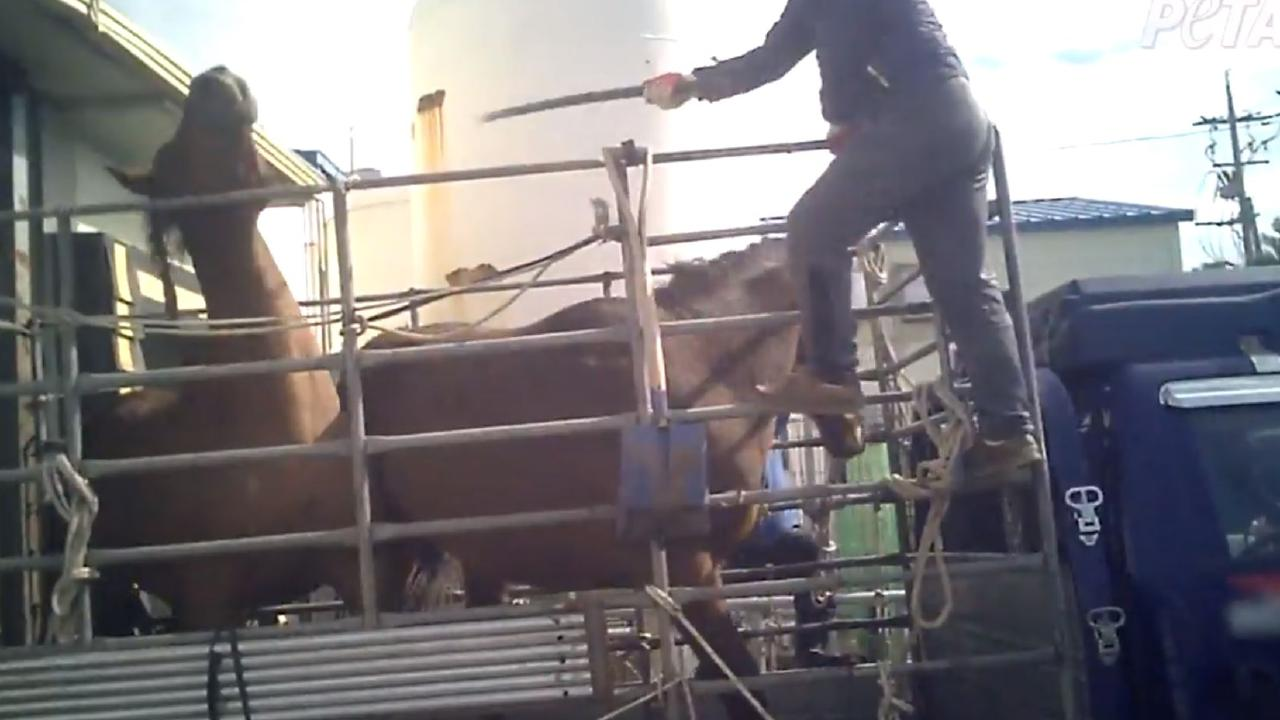The horses were beaten with pipes at the South Korean abattoir.