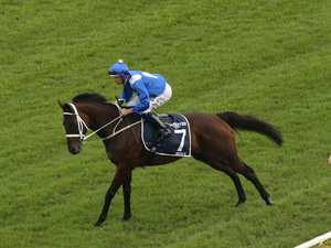 Winx's brother slaughtered for meat