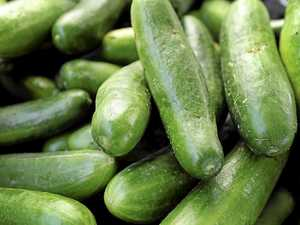 Cool as a $60m cucumber: Major vegie farm wins approval