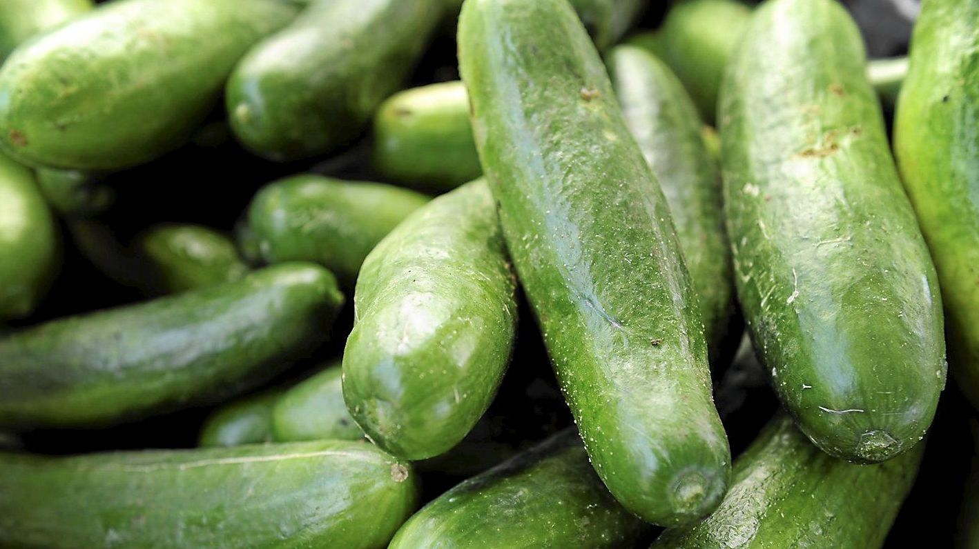 COOL: Cucumbers will be flying out of a Coast farm.
