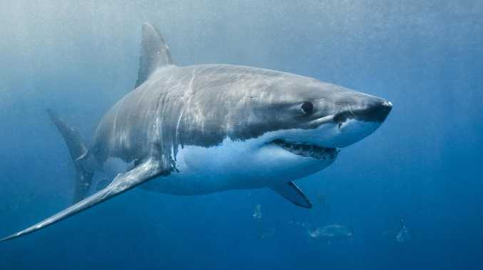 Surfers warn of monster great white lurking in surf break