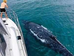 YOU'VE BEEN MUGGED: Whale holds up tour boat