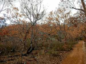 Bushland suffers 'long, painful death' in prolonged drought