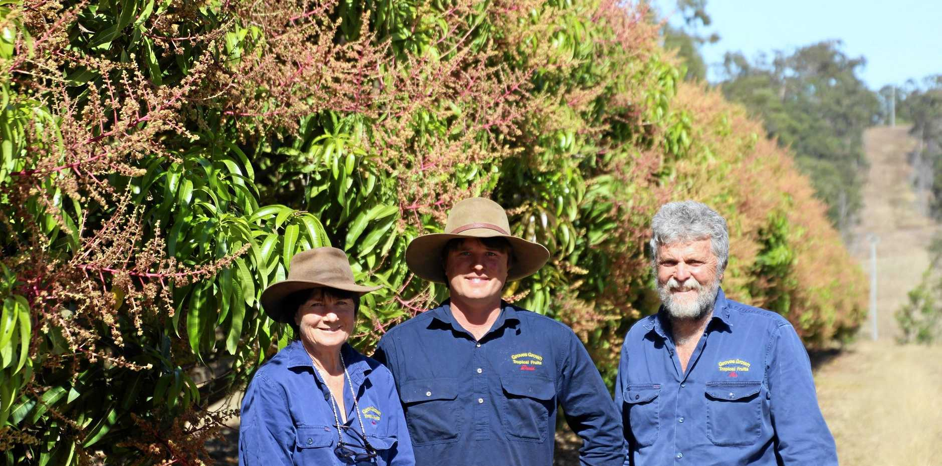 CELEBRATING SUCCESS: David, Sandi and Ian Groves were awarded Grower of the Year for the success of the mangoes and the trial of the world's first robotic mango harvester at their Yeppoon farm.
