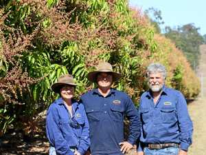 CQ growers awarded for world's first robotic mango harvester