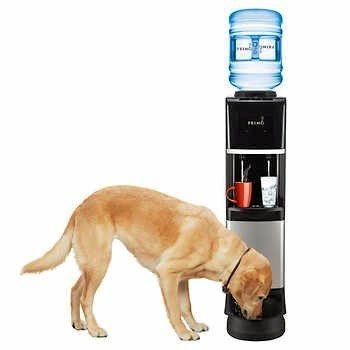 Your pooch gets to drink in style.