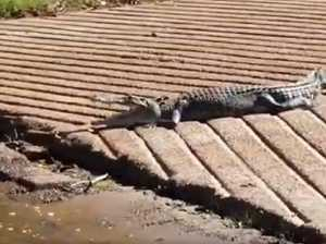 Boat ramp-hogging croc refuses to budge