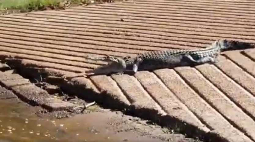 A croc snapped sun baking on the Corroboree Billabong boat ramp. Picture: Jason Rogers